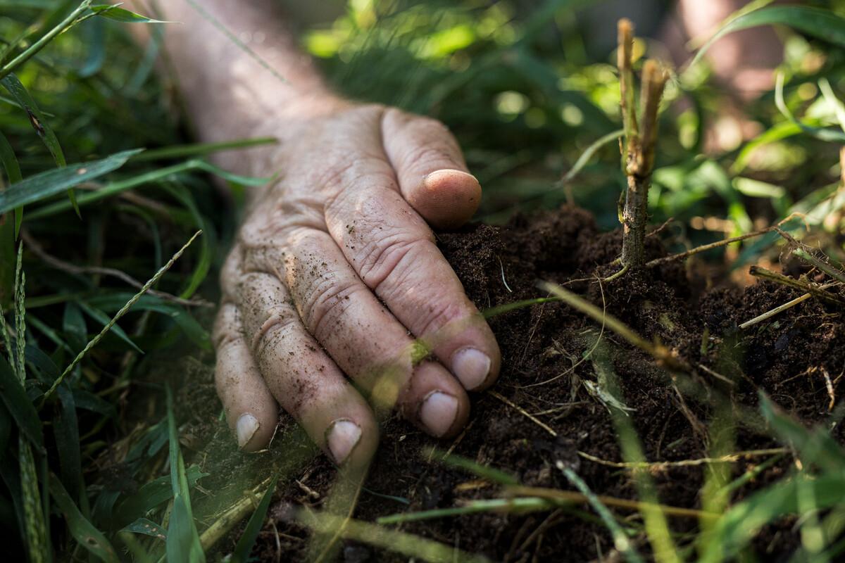 Demeter Soil fertility
