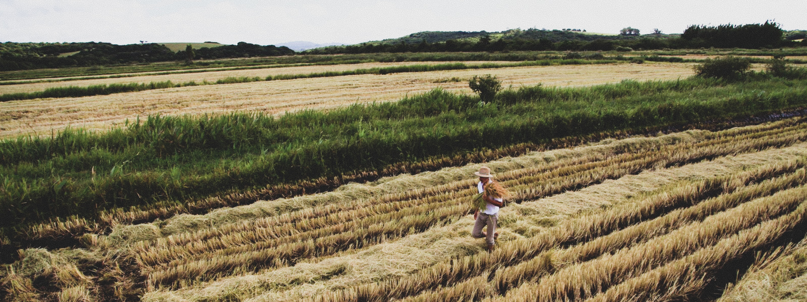 Biodynamic farming