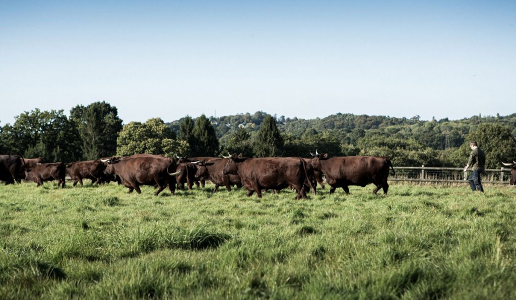 Cows have horns Demeter animal welfare