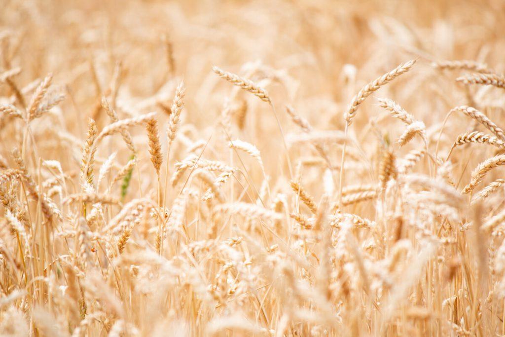 Demeter quality no GMO crop