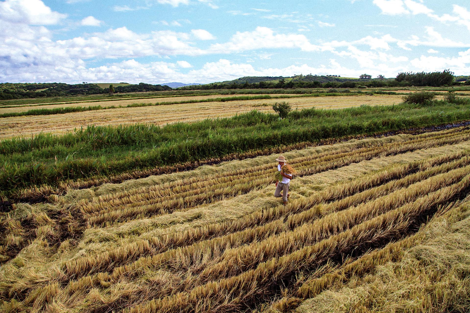 Demeter farmer Brazil